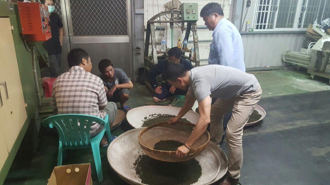 大禹嶺96k 春茶