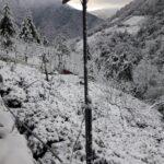 大禹嶺100K茶園雪景